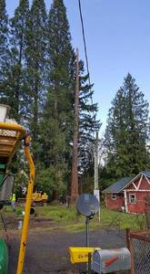 Large sequoia removal