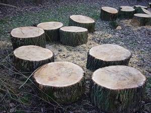 Tree stumps 66915 640