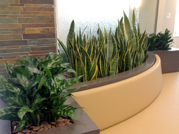 Attractive Greenleaf Interior Plants Solutions Offers A Vast Selection Of Indoor Plants  That Can Help You With Your Interior Plant Design. They Are A Great Outlet  To ...