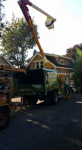Cedar tree removals