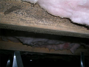 Black mold   crawl space