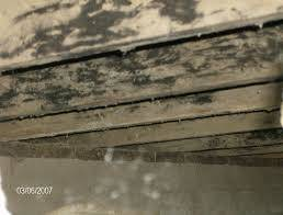 Black mold pic on joists