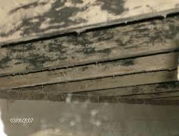 black_mold_pic_on_joists