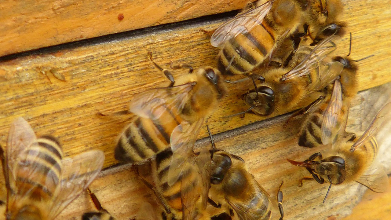 Bee Removal Service in Hemet, CA | (951) 663-6015 BeeSmart Bee Removal