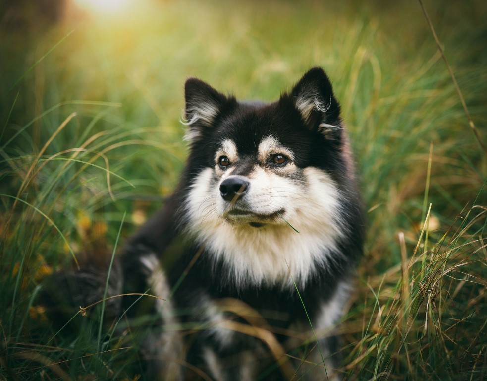 Pet Care In Delaware County Pa 610 874 4075 Paws And