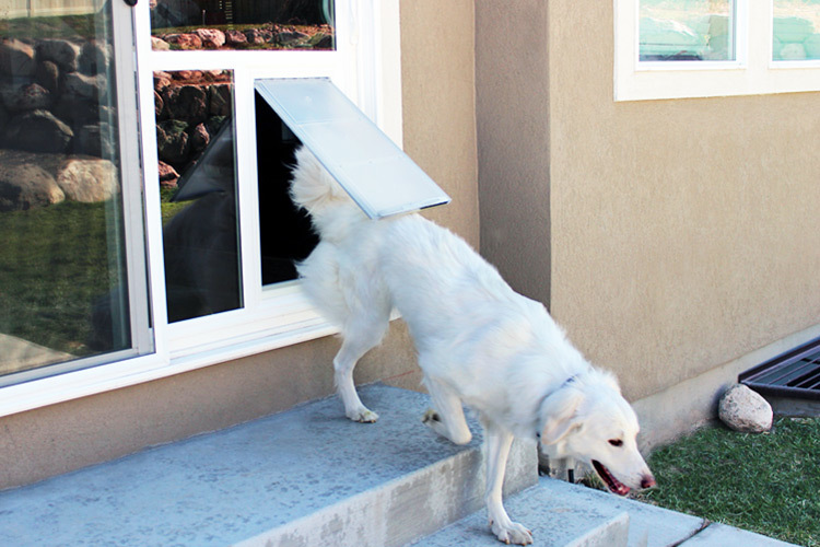 dog_door_photo