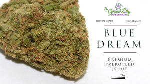 THE-GREEN-LILY-BLUE-DREAM-PREROLLED-CANNABIS-JOINT