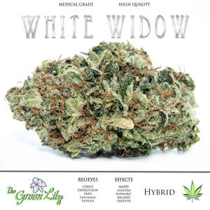 THE_GREEN_LILY_WHITE_WIDOW_STRAIN_MEDICAL_MARIJUANA_BUD_WHITE_WIDOW