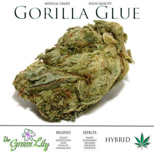 The_Green_Lily_Yukon_Gorilla_Glue_Hybrid_Bud