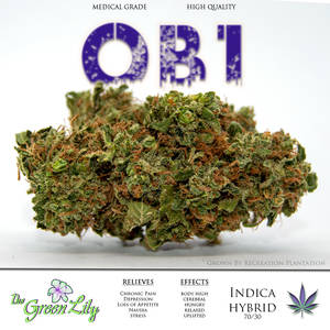 THE_GREEN_LILY_recreation_plantation_OBI1_(obi_wan_ogI)__STRAIN_MEDICAL_MARIJUANA_BUD_-Recovered