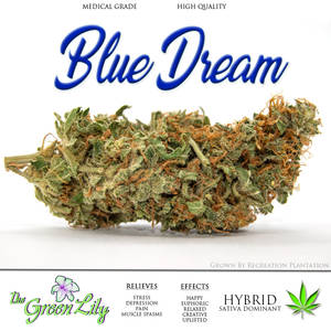 The_Green_Lily_Hybrid_Cannabis_strain_BLUE_DREAM_2.0_grown_by_recreation_plantation