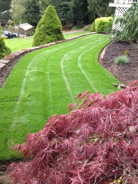 Lawn Maintenance in Salem, OR | Bright Lawn Landscape