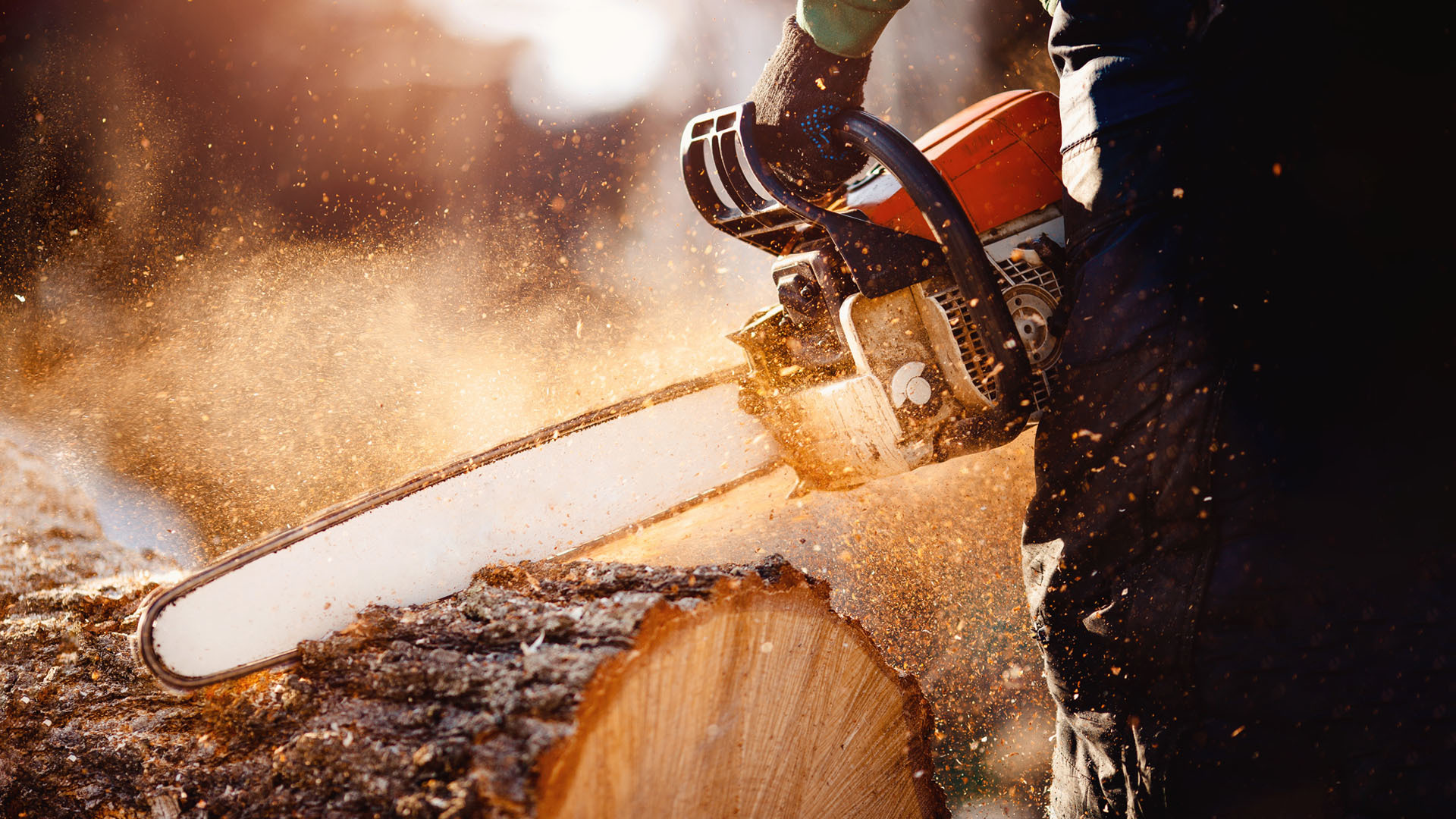 Tree removal tree care