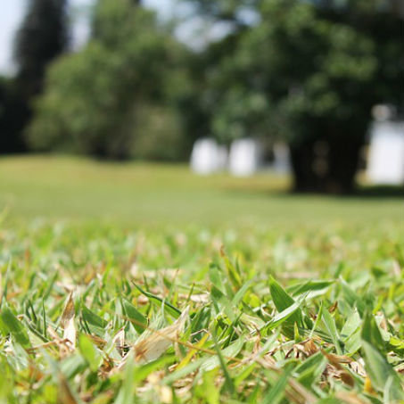 Landscaping Company In Albany Ga Lopez Lawn Care 229