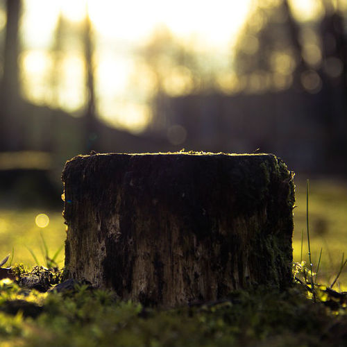 Tree Company in Middletown, OH | Alexander Affordable Tree Service